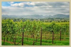 Urlaub in der Ferienregion Südliche Weinstraße beim Weingut Friedrichshof
