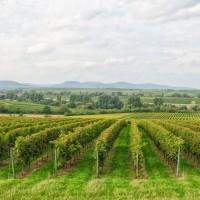 Friedrichshof - Weingut in der Pfalz