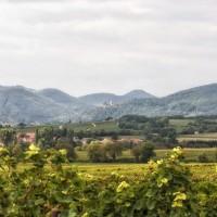 Blick über die Weinberge zur Burg Landeck